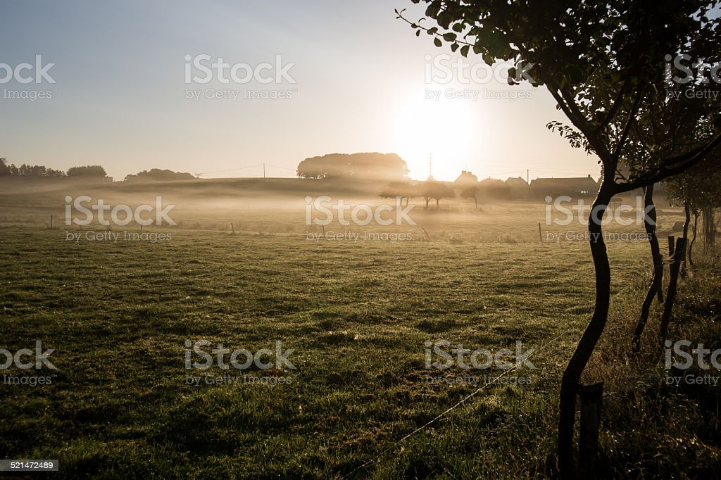 Sunset on a meadow stock photo