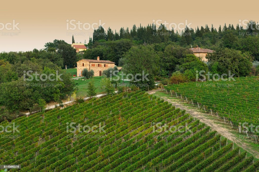 sunset on a vineyard in tuscany near Castellina in Chianti, italy. stock photo