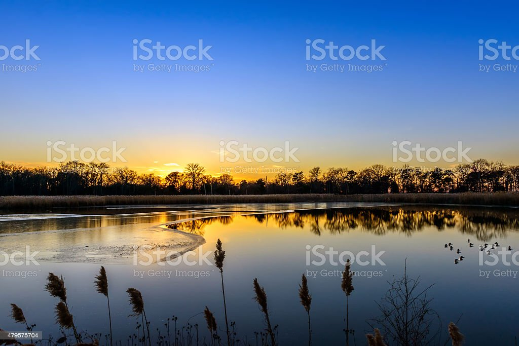 Sunset on an icy lake with canvasback ducks stock photo
