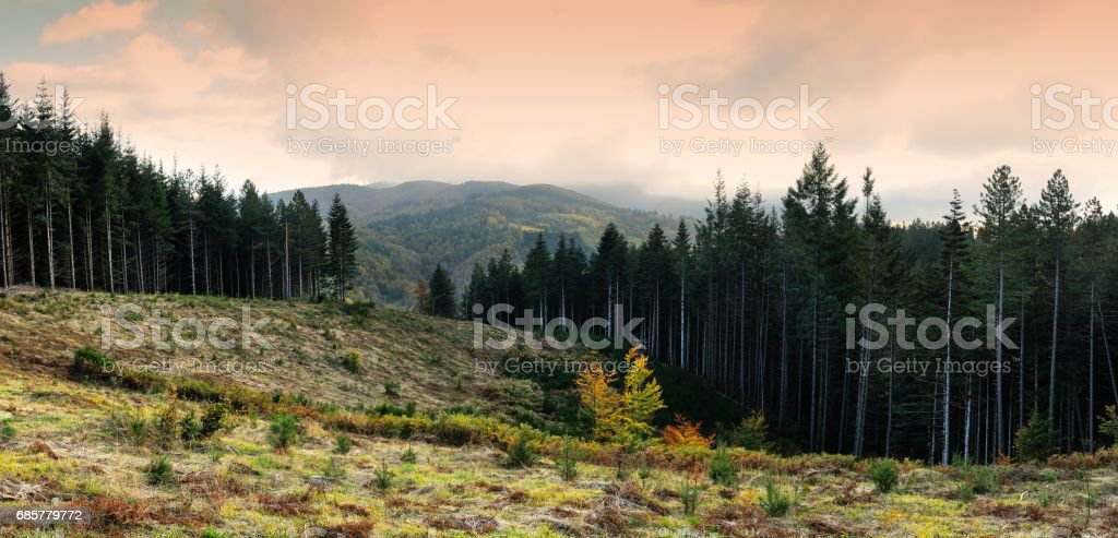 Sunset on Beautiful Forest in Tuscany Mountains. Italy. royalty-free stock photo