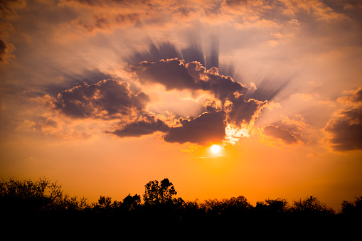 sunset on golden sky and cloud background and black dark forest stock photo download image now istock sunset on golden sky and cloud background and black dark forest stock photo download image now istock
