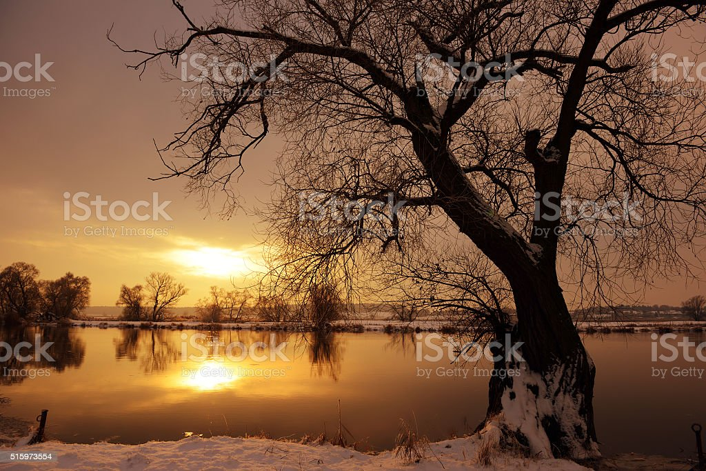 Sunset on Havel river landscape with willow tree in front stock photo