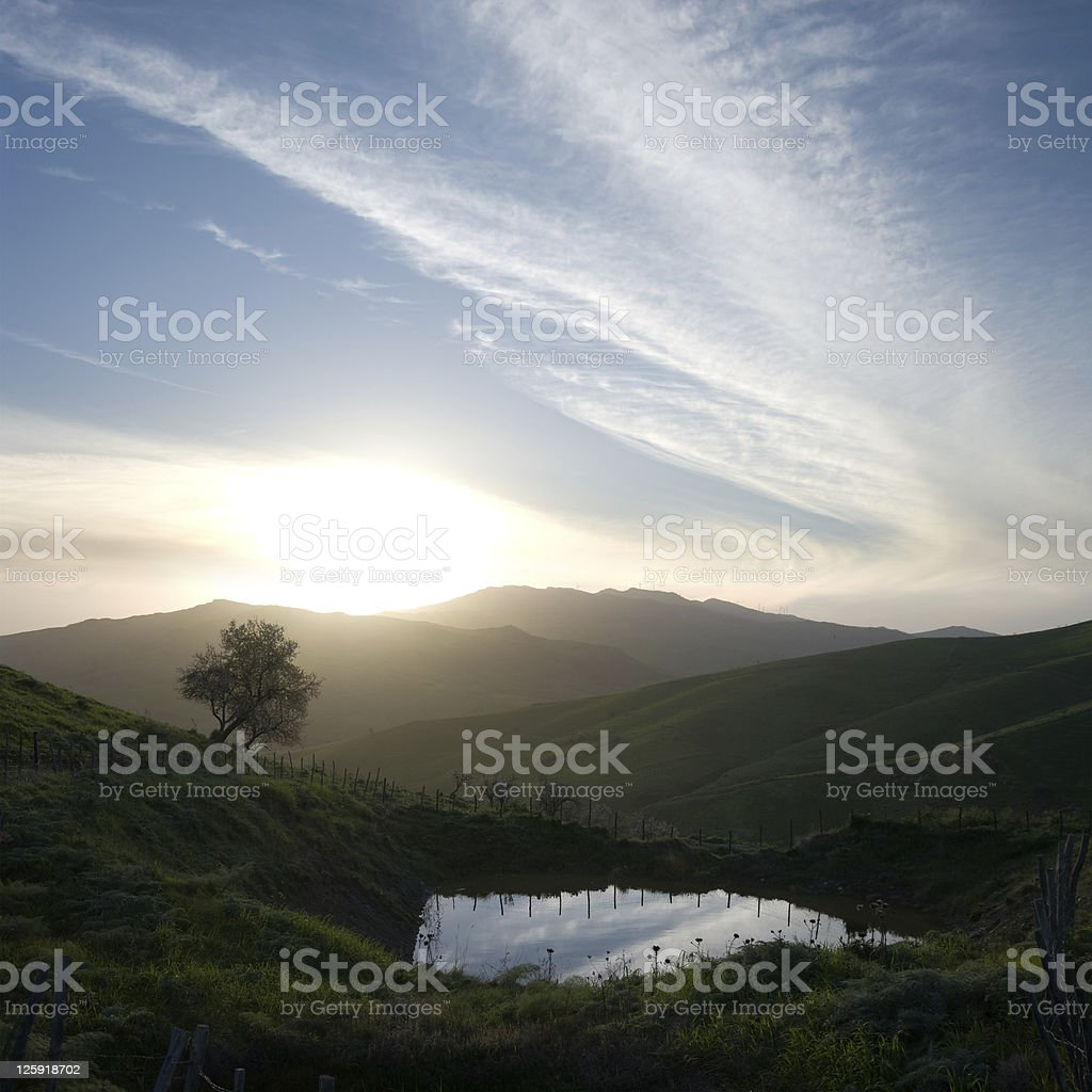 Sunset On Lonely Tree And Pond royalty-free stock photo