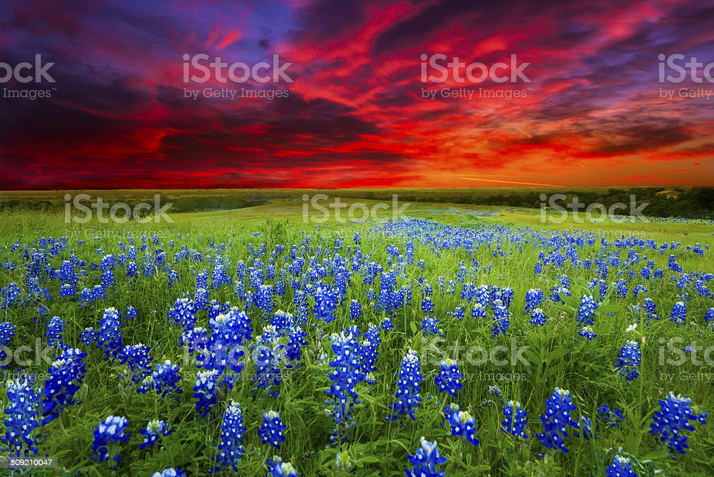 Sunset on Sugar Ridge Road, Ennis, TX stock photo