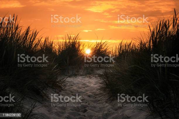 Photo of Sunset on Sylt island. Sand alley and tall grass at golden hour