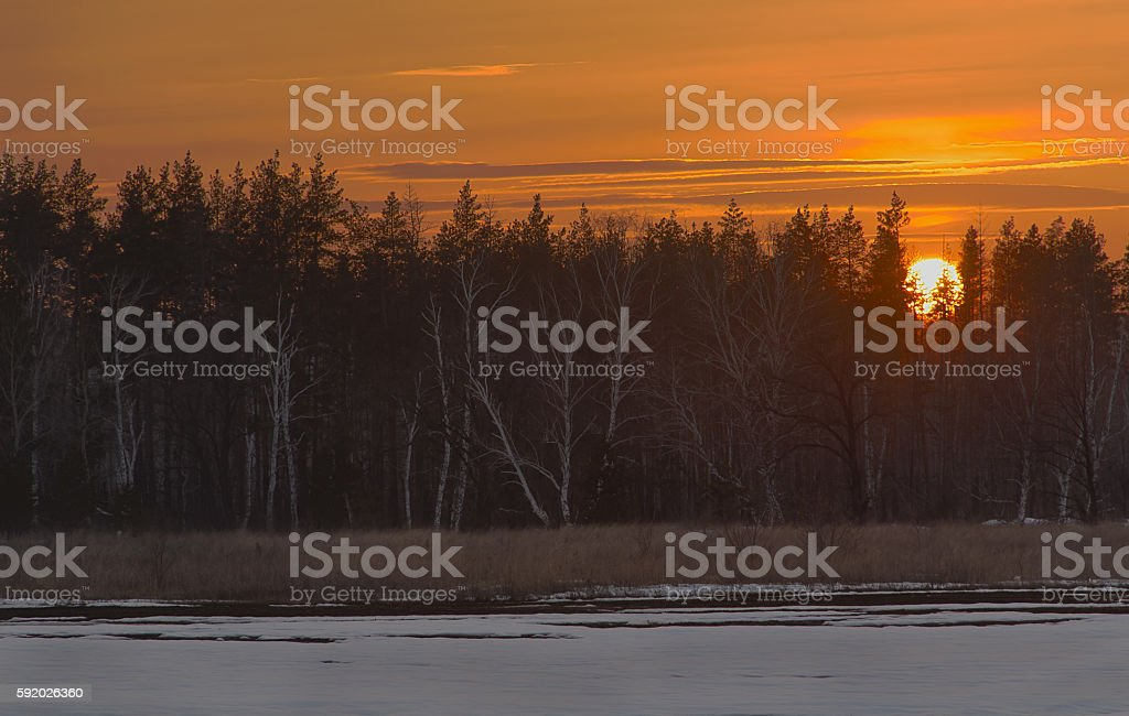 sunset on the background of a winter forest стоковое фото