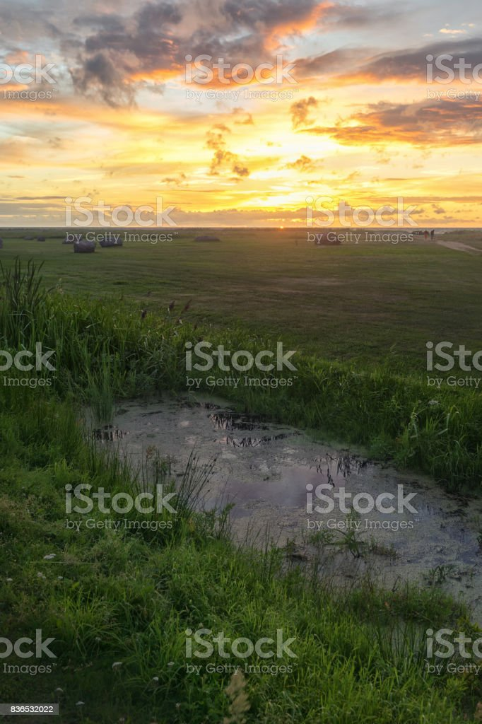 Sunset on the Baltic Sea in summer stock photo