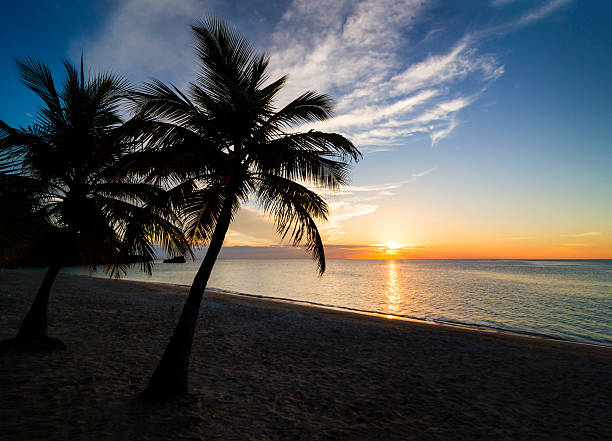 Sunset on the beach Palm black outline during sunset on the beach roatan stock pictures, royalty-free photos & images