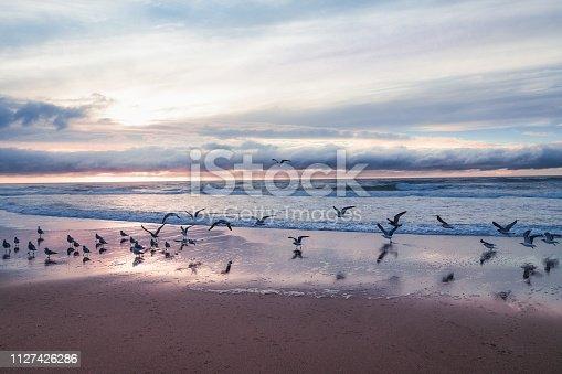 Beautiful sand beach, sea, and flock of birds, California sunset