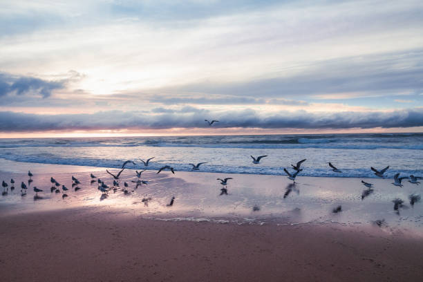 Sunset on the beach with flock of seagulls stock photo