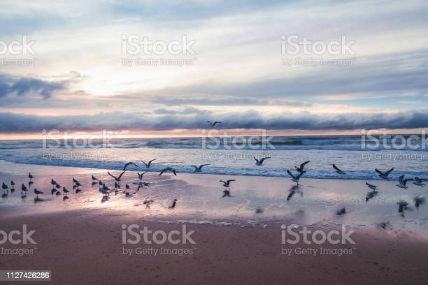 Photo of Sunset on the beach with flock of seagulls