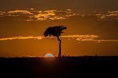 The sun goes down on Masai Mara National Reserve