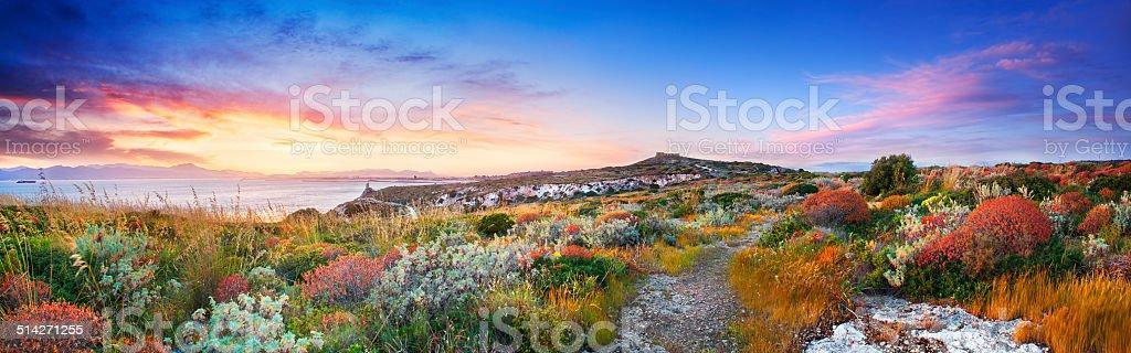 Pôr do sol no Mediterrâneo vegetação - foto de acervo