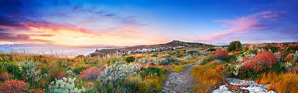 Sunset on the Mediterranean vegetation stock photo
