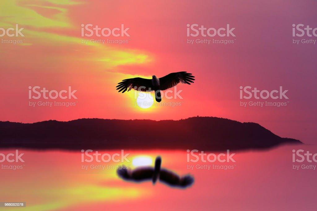 solnedgång på berget med reflektion på vatten och fågel som flyger hem - Royaltyfri Abstrakt Bildbanksbilder