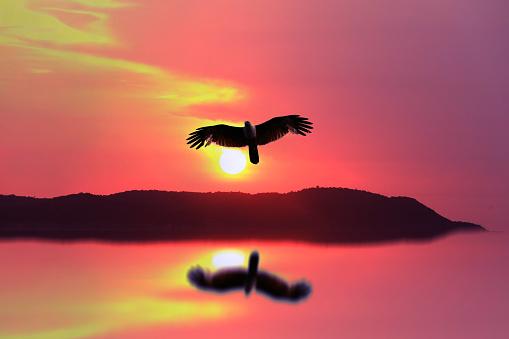Solnedgång På Berget Med Reflektion På Vatten Och Fågel Som Flyger Hem-foton och fler bilder på Abstrakt