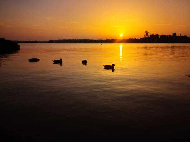 A sunset on the river with ducks stock photo