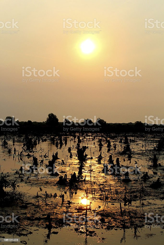 Sunset on the swam royalty-free stock photo
