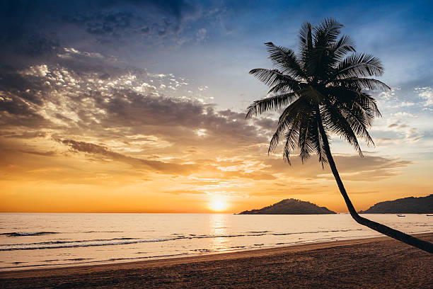 Sunset on  tropical beach Sunset over empty tropical beach with silhouette of a palm tree goa stock pictures, royalty-free photos & images