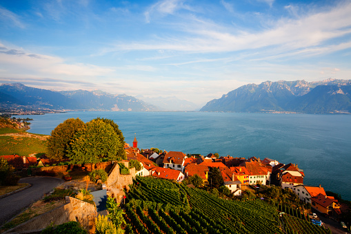 Sunset on vineyards  over lake Leman (lake of Geneva), Switzerla