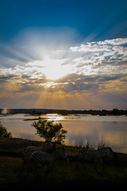Sunset on Zambezi River with Zebras stock photo