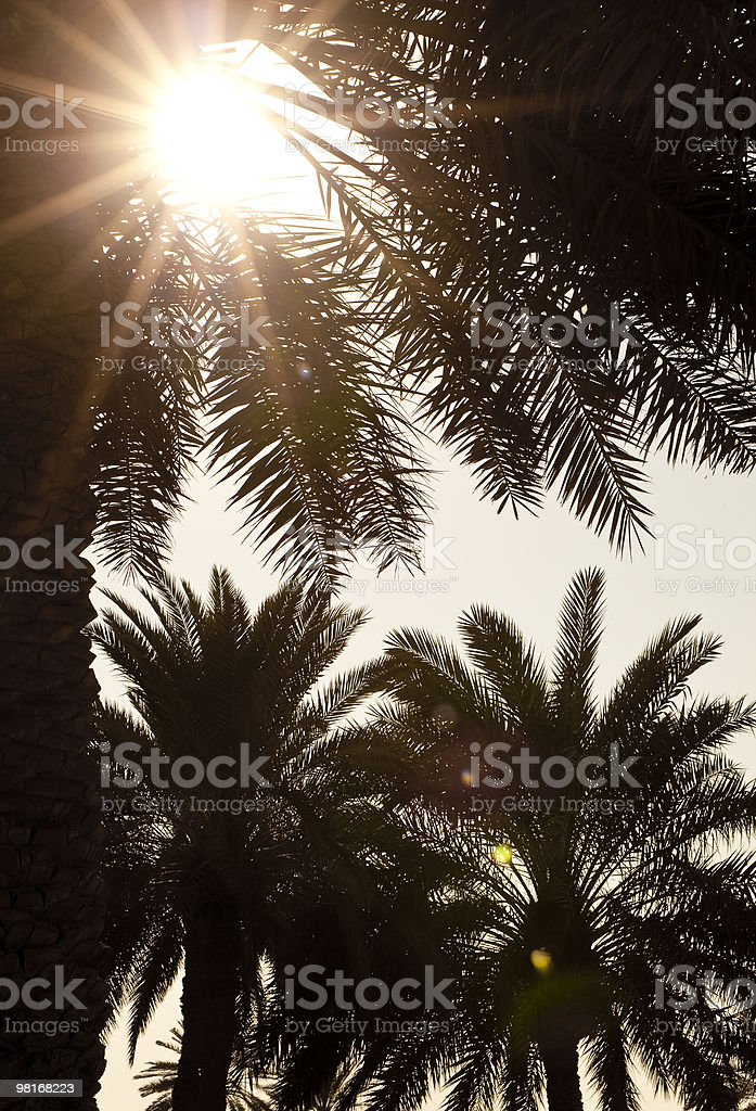 Sunset or Sunrise Behind Palm Trees royalty-free stock photo