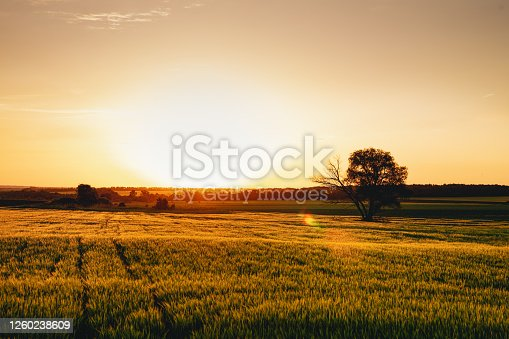 istock Sunset over a field of young wheat 1260238609