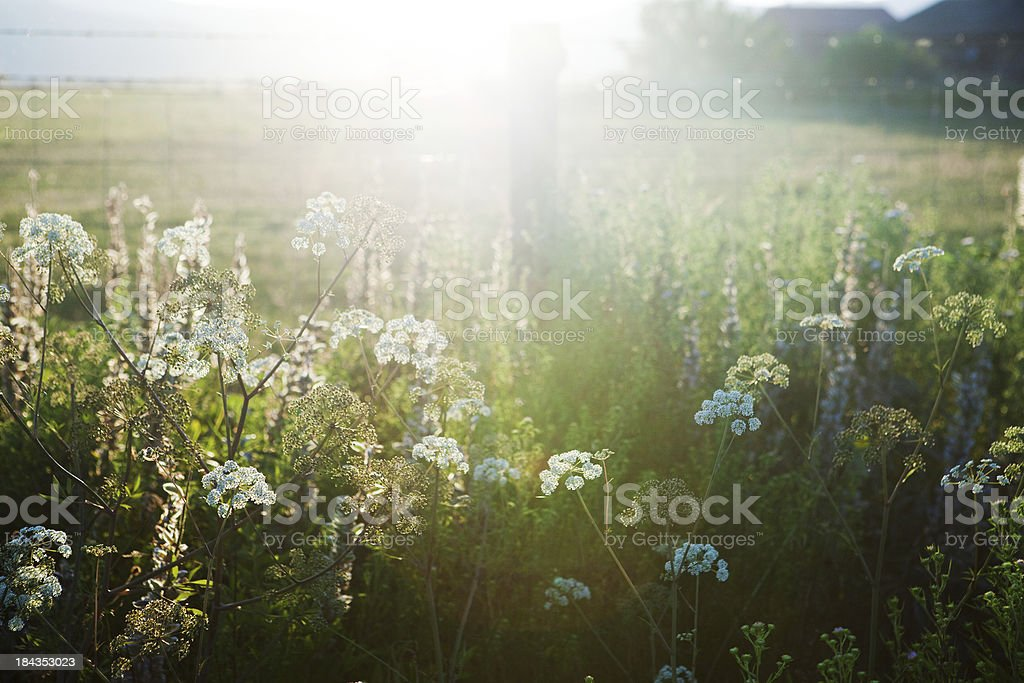 Sunset over a meadow royalty-free stock photo