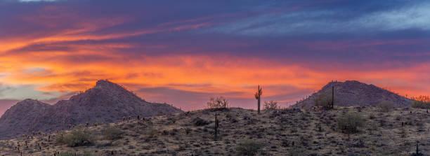 A Sunset over a Saguaro Cactus stock photo