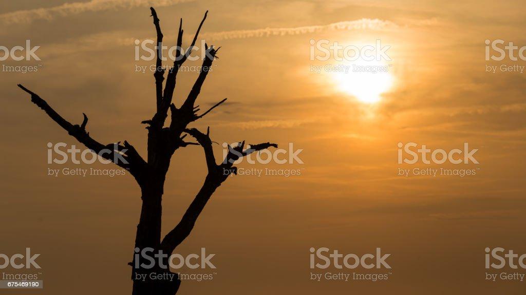 Sunset over a stark bare tree photo libre de droits