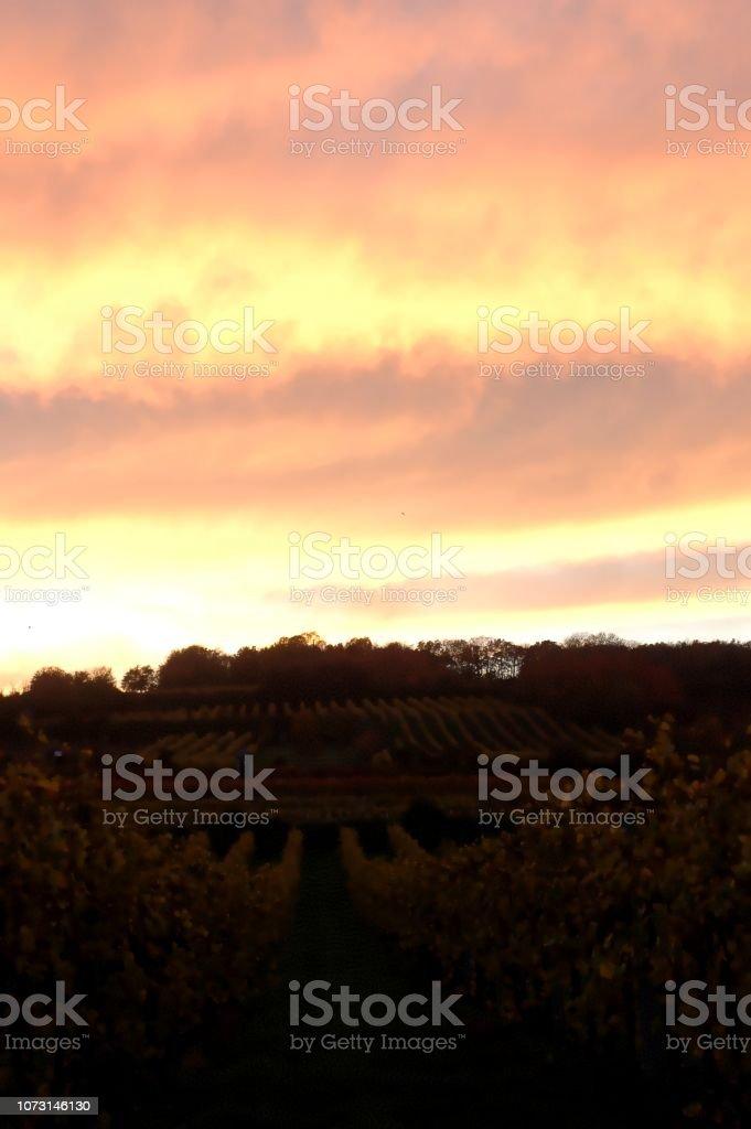 Sonnenuntergang über einem Weinberg im Herbst, rot, rosa und goldenen Lichter – Foto