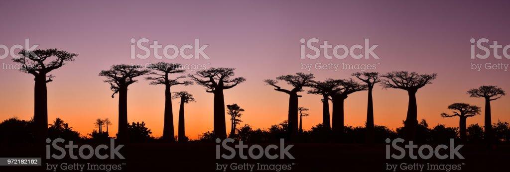 Puesta de sol sobre Alley del baobabs, Madagascar - foto de stock