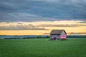 Sunset over an abandoned prairie barn in the middle of a wheat field on the Saskatchewan prairies