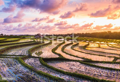 This is a horizontal, color photograph shot with a Nikon D800 on a scenic sunset near Tanah Lot, Bali Indonesia. Rows of bright green sprouts are growing out of the wet rice paddy fields. A traditional thatched hut stands out in the landscape. Colorful clouds fill the sky.