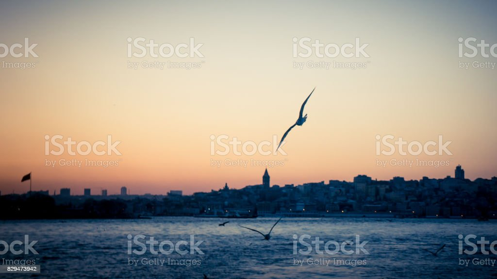 Sunset over Bosphorus and a seagull in focus with Istanbul cityscape stock photo