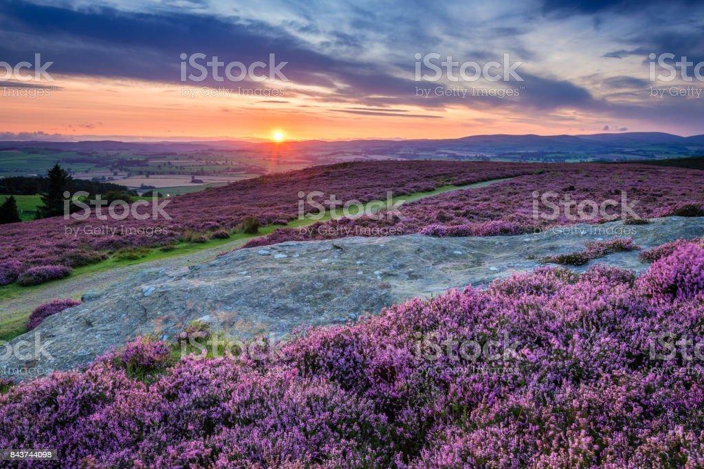 Sunset over Cheviot Hills and Rothbury Heather stock photo