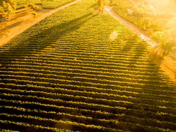 Sunset over Chilean vineyard. Landscape. Aerial view stock photo