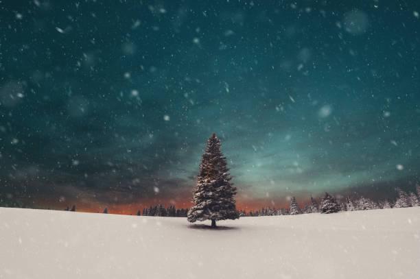 Sonnenuntergang über Weihnachtsbaum – Foto
