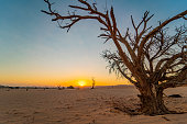 Sunny sunset over desert and lonely tree