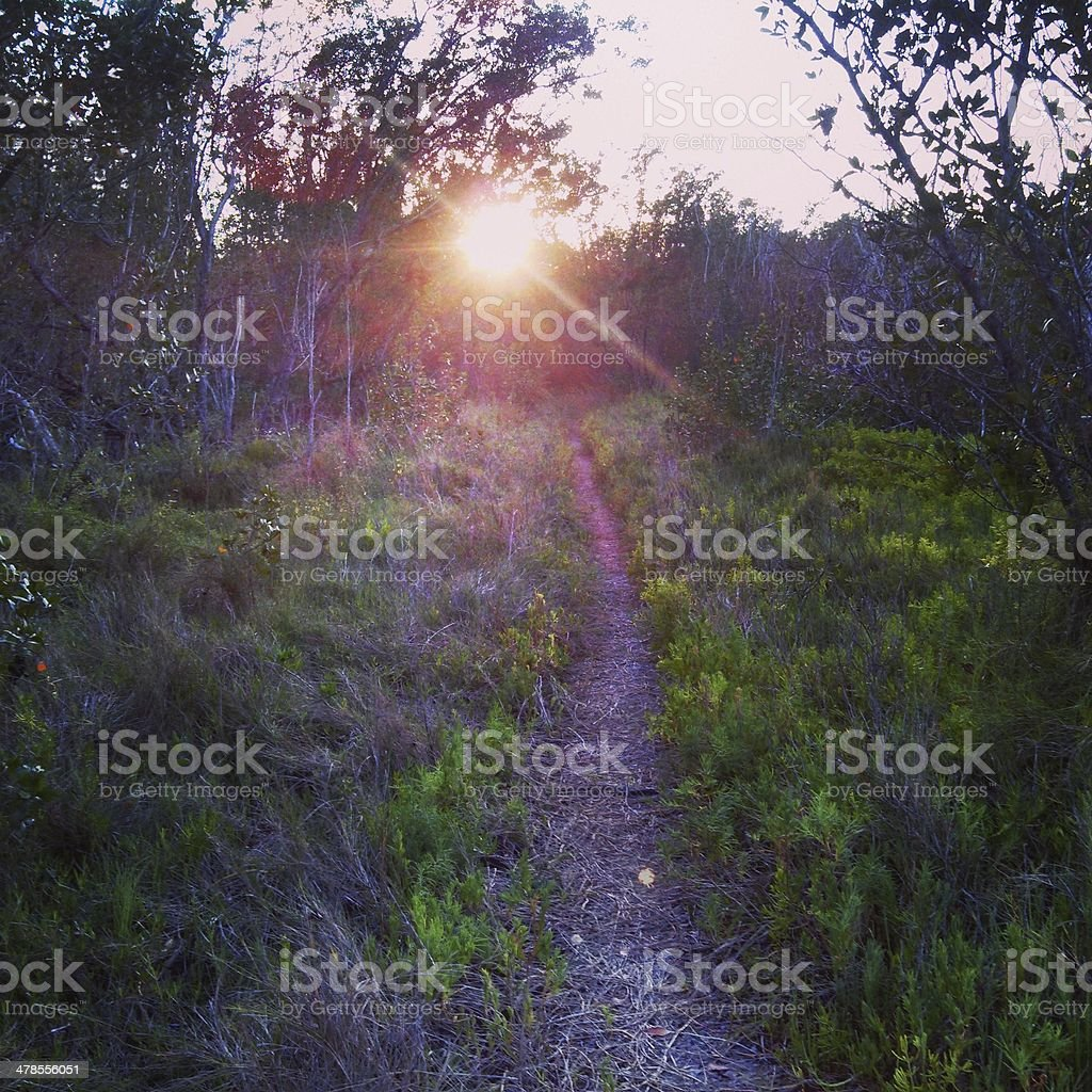Sunset Over Everglades Trail royalty-free stock photo