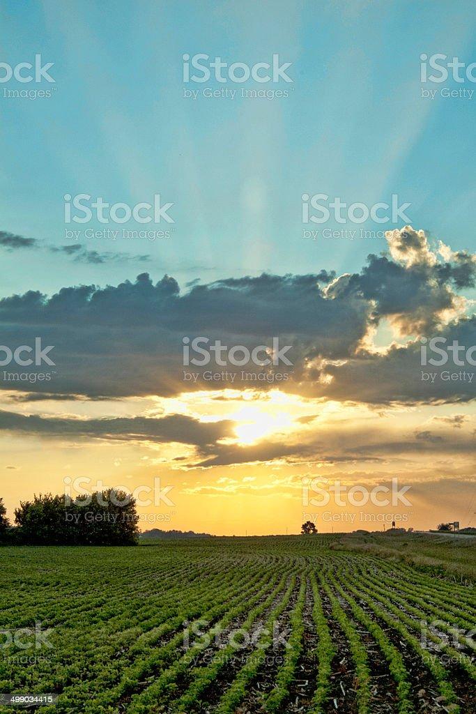 Sunset over Farm Field stock photo