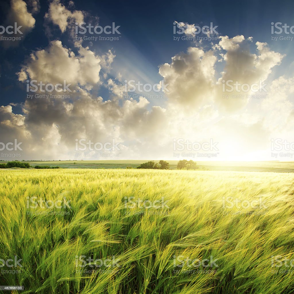sunset over green field stock photo