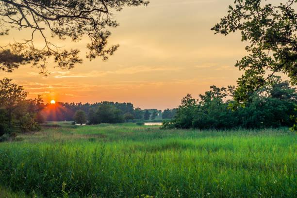 Sonnenuntergang über grünen Wald und See in der Ferne. – Foto