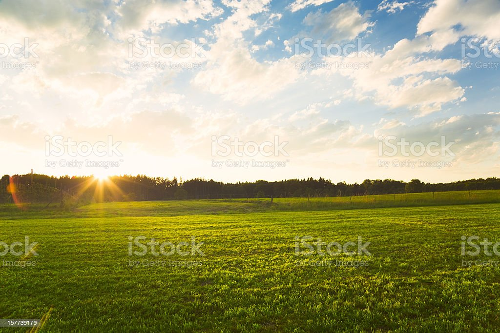 Sunset over green meadow stock photo