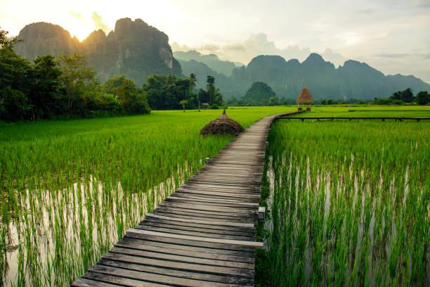 sonnenuntergang über grüne reisfelder und berge in vang vieng, laos - vang vieng stock-fotos und bilder