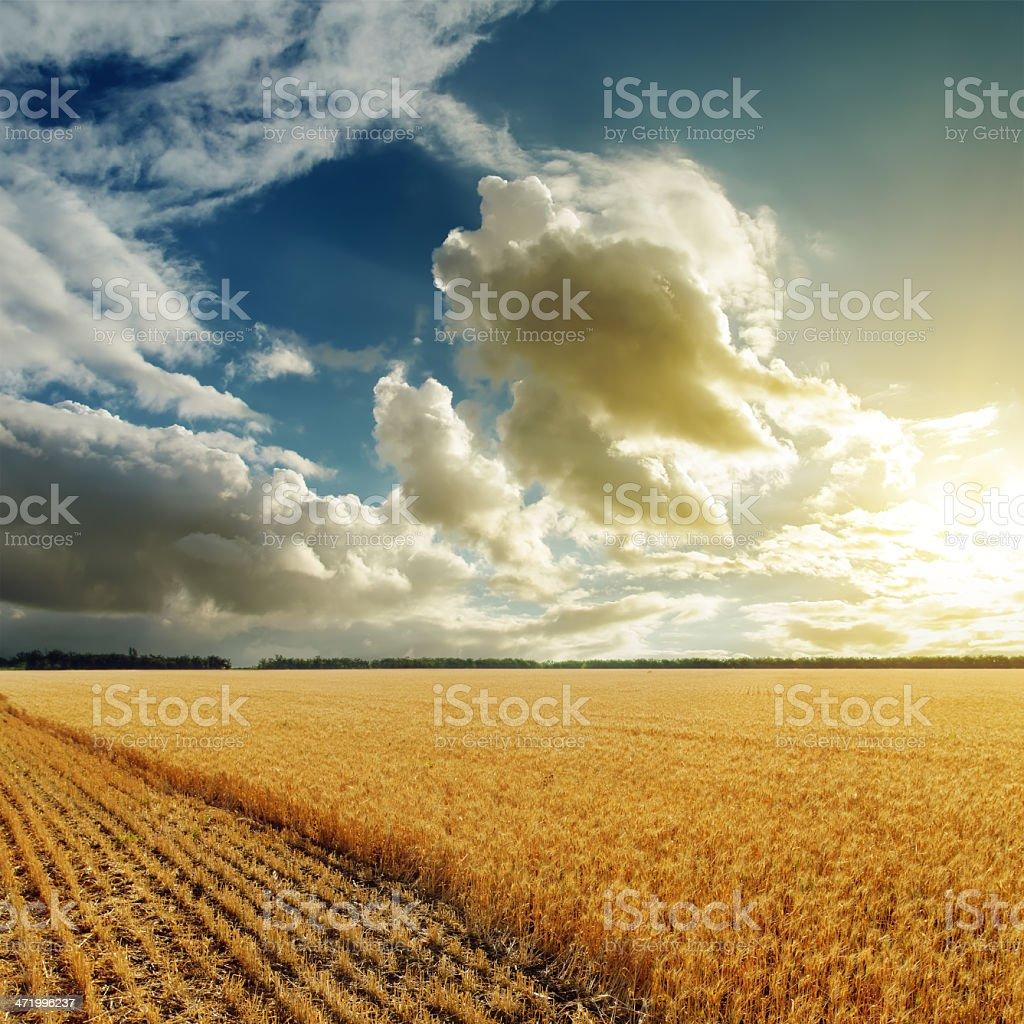 sunset over harvesting field stock photo