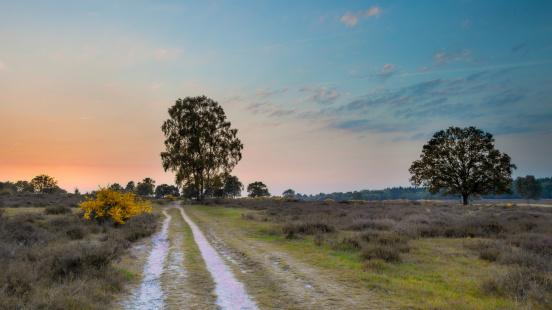 Sunset over Heathland in the Netherlands