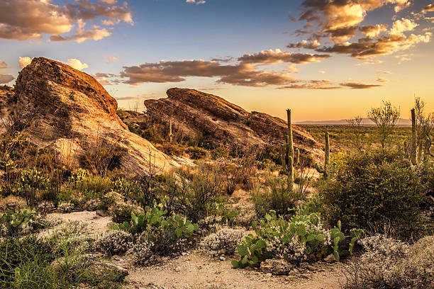 sunset over javelina rocks in saguaro national park - javelina stock pictures, royalty-free photos & images