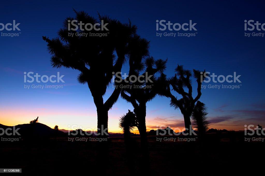 Sunset over Joshua Tree, Joshua Tree National Park, USA stock photo