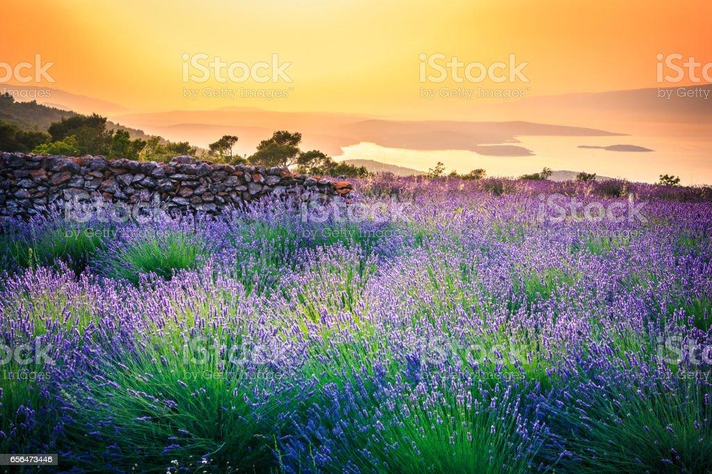 Sunset over Lavender field - Landscape Sunset over Lavender field - Landscape Agricultural Field Stock Photo